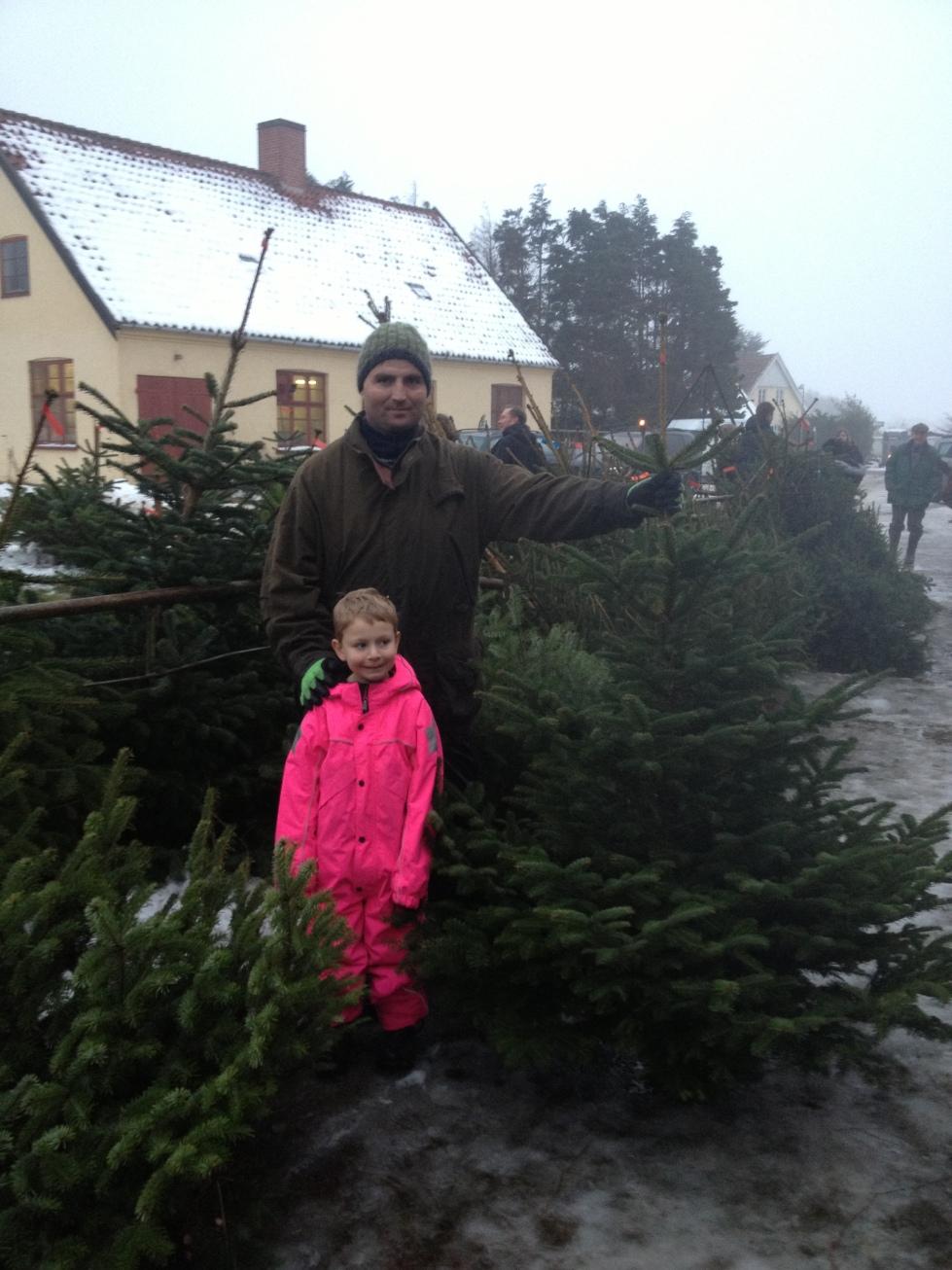 Her ses Lars Miller og Thea med det juletræ, der skal stå i vores stue juleaften - 170 cm. ædelgran. Foto: Lotte Lund