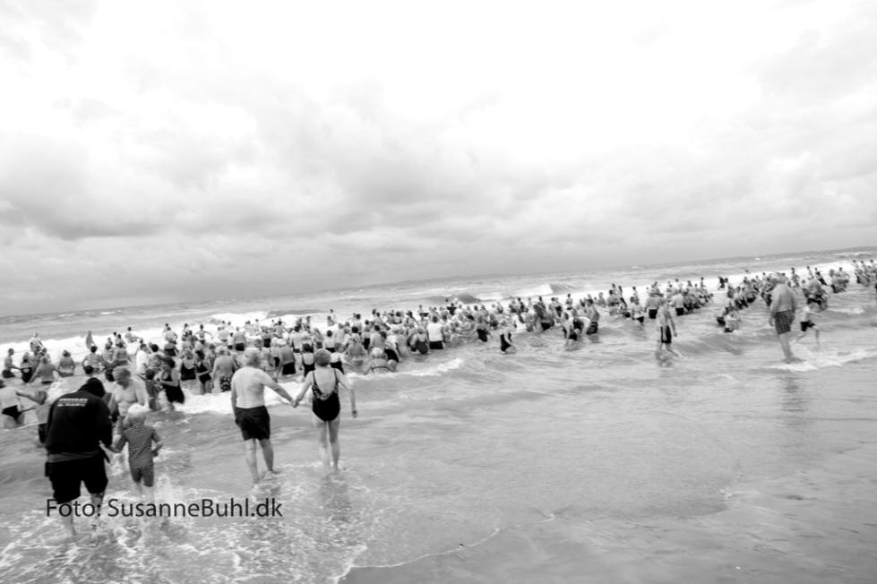 Aldrig er så mange hornbækkere gået i vandet på samme tid på en gang. Foto: SusanneBuhl.dk