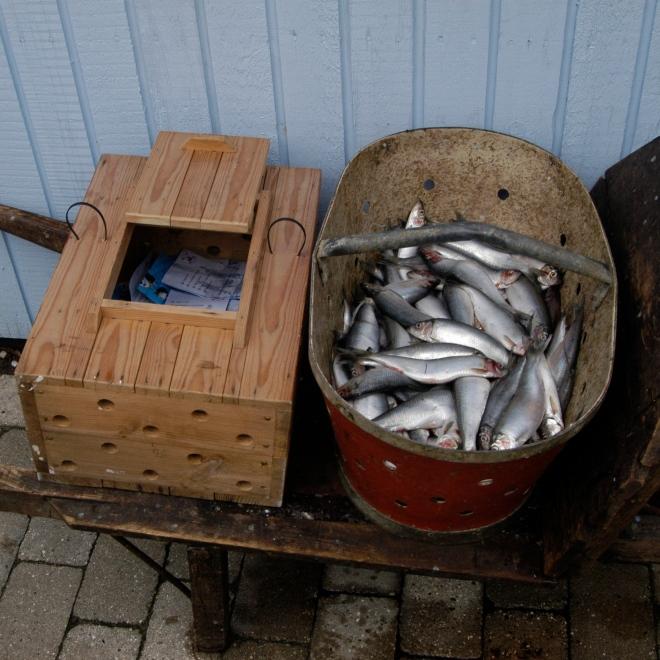 Der er selvfølgelig også en lille konkurrence. Foto: Hornbæk Havneforening.